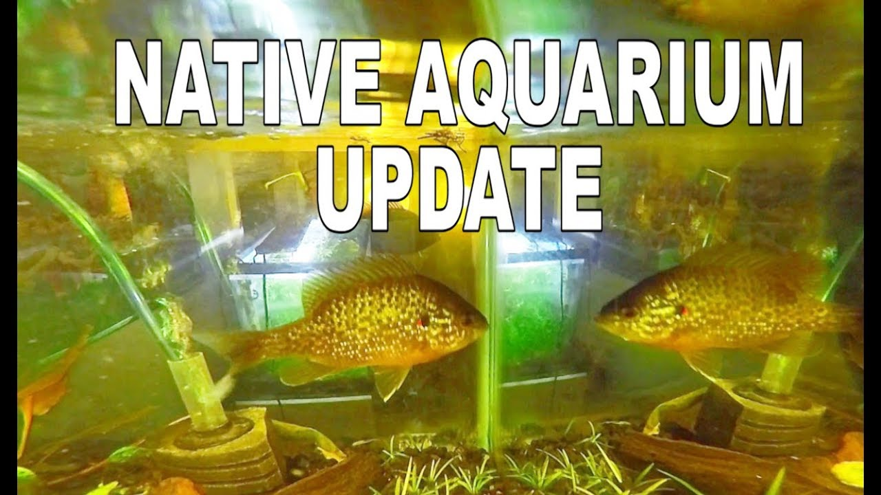 1 MONTH After CATCHING WILD Fish for Aquarium!! | Maintenance