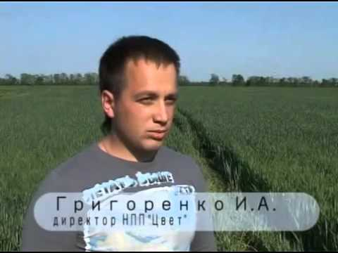 Аммиачная селитра - ХимАгроПром