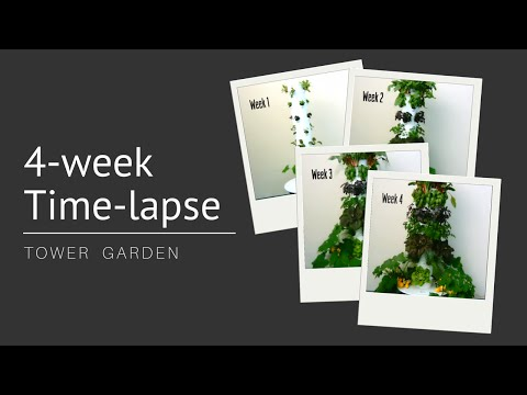 Watch Tower Garden® Grow: 4-Week Time-Lapse
