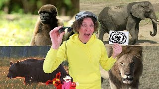 Where Is The Lion? Song with Matt | Wild Animals | Sing, Draw, and Write | Learn English Kids