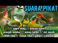 Terbaru Suara Pikat By Smstachanel Terbaru 2020 Audio(.mp3 .mp4) Mp3 - Mp4 Download