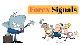 Forex Trading Signals - The Truth About Forex Signals