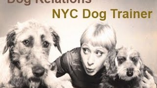 Positive Reinforcement Dog Trainer in New York City | DogRelations NYC