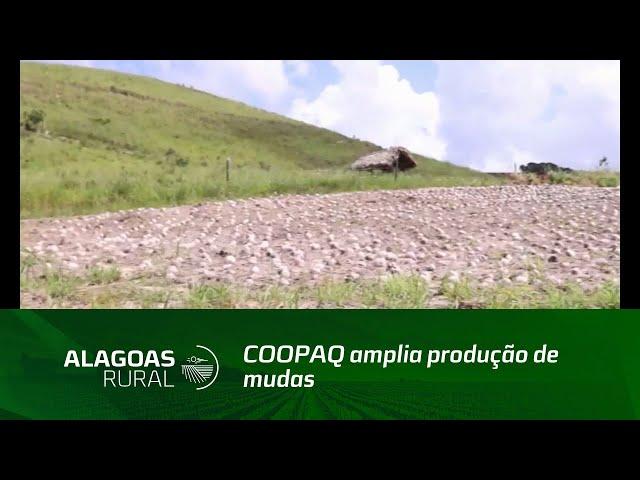 COOPAQ amplia produção de mudas de coqueiro na região Norte