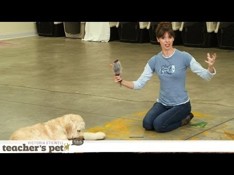 Teach a Dog to 'Take It' and 'Drop It' | Teacher's Pet With Victoria ...