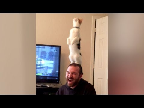Are this the BEST CAT FAILS YOU'VE EVER SEEN or what?! – Extremely FUNNY CAT compilation