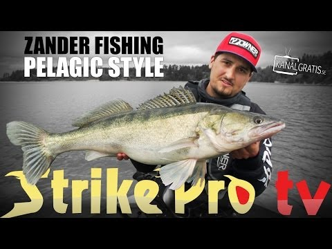 Strike Pro TV - Zander Fishing Pelagic Style