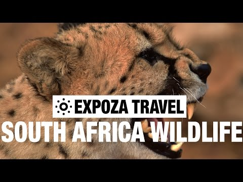 South Africa's Wildlife Vacation Travel Video Guide