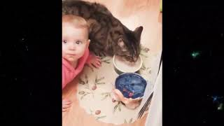 TRY NOT TO LAUGH - Baby and Cat Fun and Fails - Animals Funny