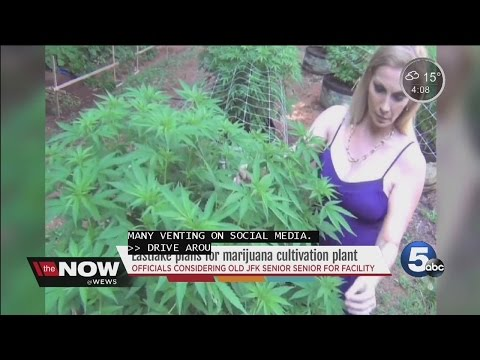 Eastlake Medical Marijuana Proposal- Tara Molina