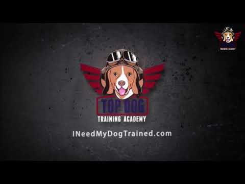 RoZay | Pit Bull Obedience | Top Dog Training Academy | Balanced Training | New Orleans Dog Trainer