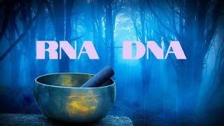 ?  RNA DNA HEAL & REPAIR