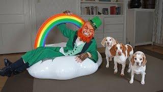 dogs-vs-leprechaun-prank-funny-dogs-maymo-penny-potpie