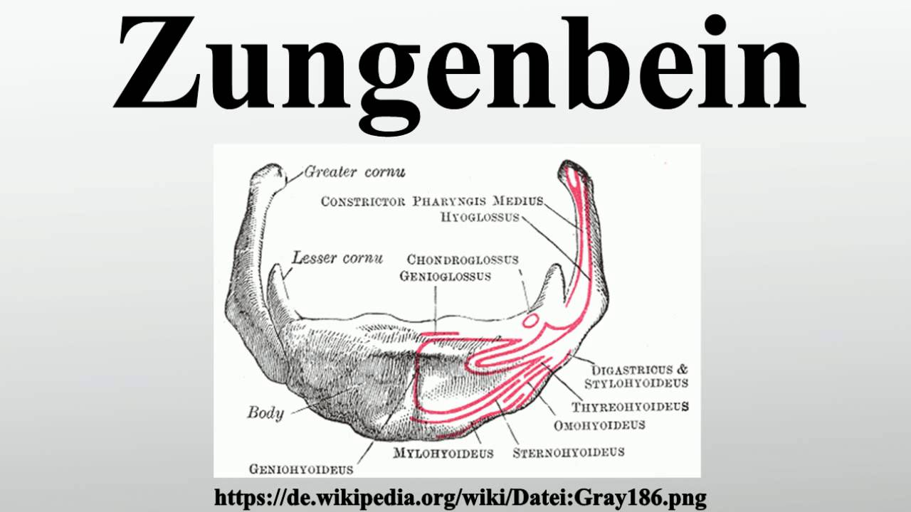 Zungenbein - YouTube
