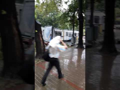 Copac căzut în Copou după vijelie - intervenție (Ești din Iași dacă)
