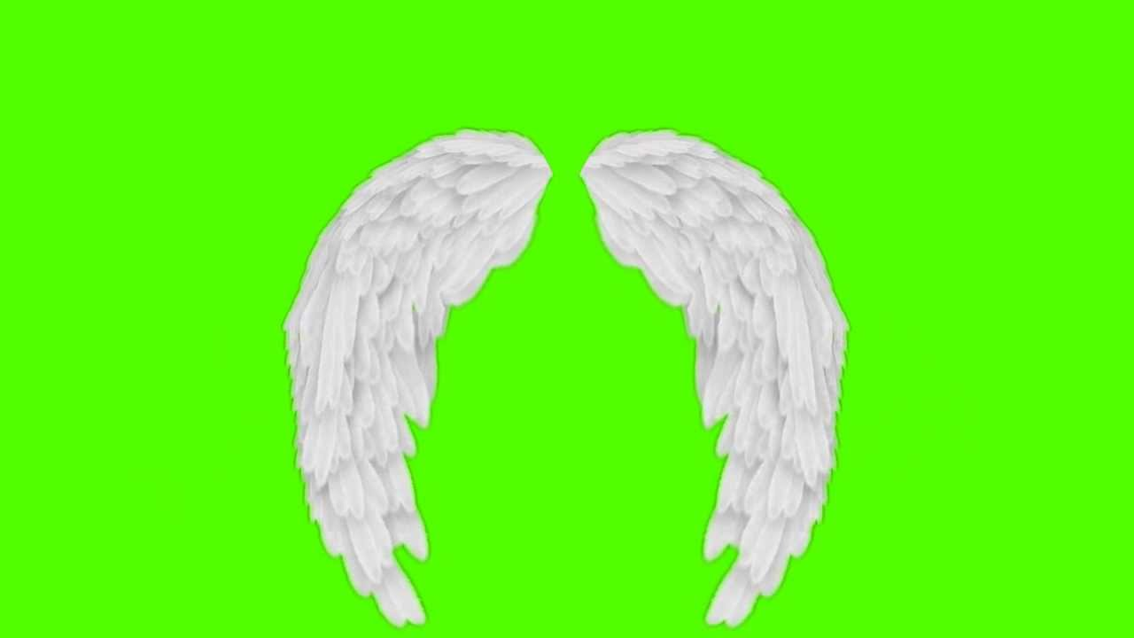 Green Screen Footage Angel Wings