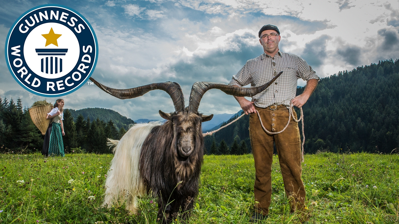 Largest horn span on a goat - Guinness World Records
