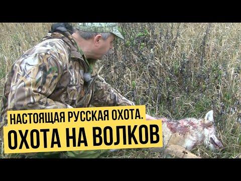 Настоящая русская охота. Охота на волков
