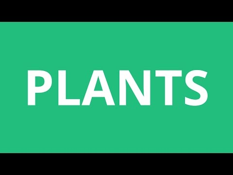 How To Pronounce Plants - Pronunciation Academy