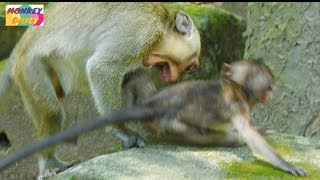 OMG! Why Little monkey do seriously to Lori like this?|Pity Lori baby so much|Monkey Daily 821