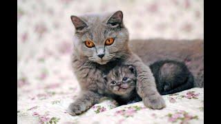 Коты и кошки Смешное видео про котов Funny animals Top