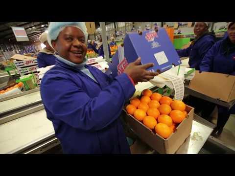 SAFE Citrus Harvest Video