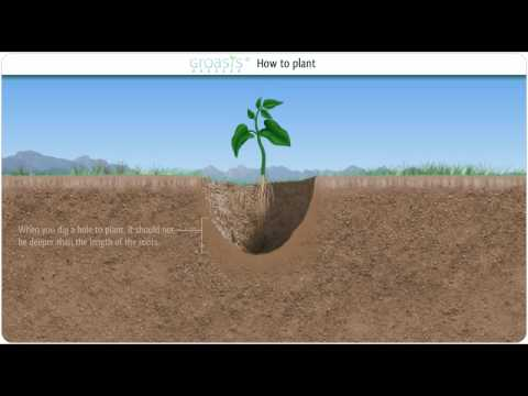 Capillary water and how it can help to combat desertification