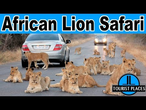 Lions Attack At African Lion Safari Toronto, Ontario, Canada | Tourist Places Attractions