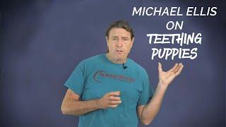 Michael Ellis on Teething Puppies