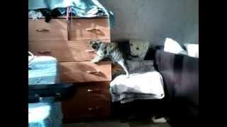 Кошка выбирает носки