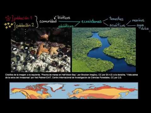 Ecosistema Qué Es Tipos Características Importancia Y Más