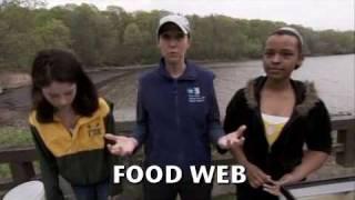 162 Hudson River Estuary: Food Web