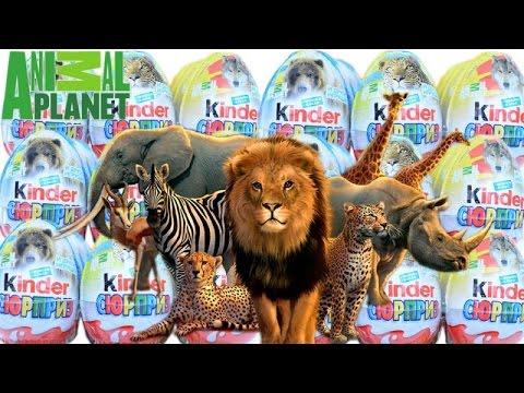 Видео: Киндер Сюрприз Animal Planet, новая серия и сборка
