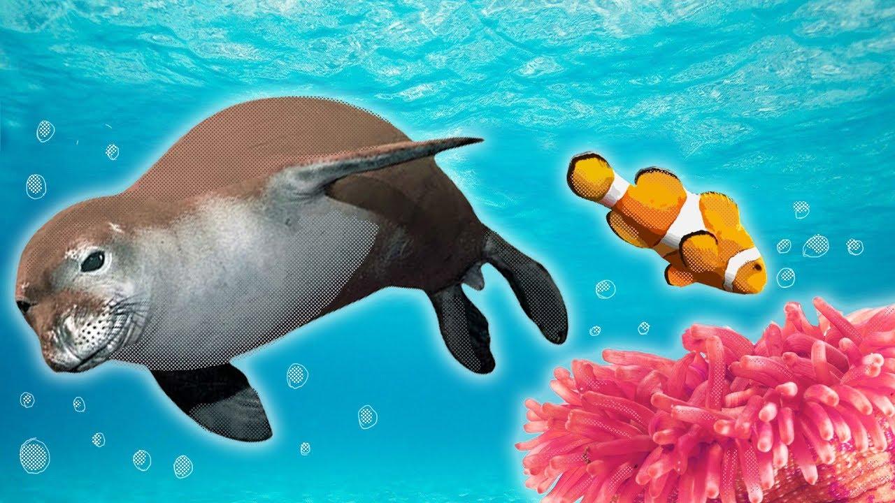 Image result for underwater animals