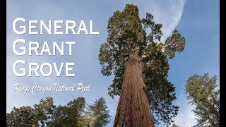 Exploring General Grant Grove in the Winter: Sequoia & Kings Canyon National Park