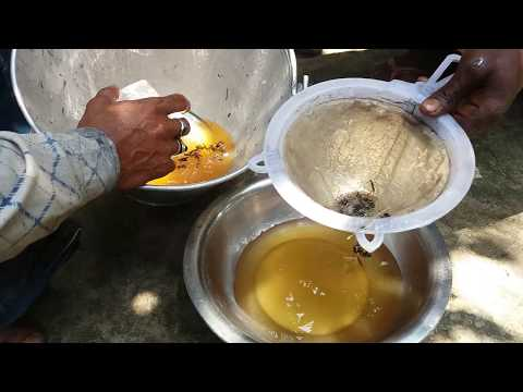 Honey Collect From Mango Tree In Rural Village Bangladesh। Collecting Pure Honey BD। प्रामाणिक शहद