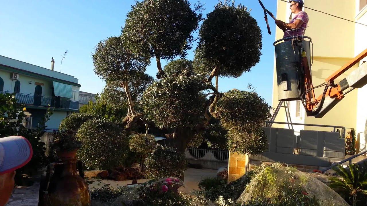Come fare un albero di ulivo a sfera... - YouTube