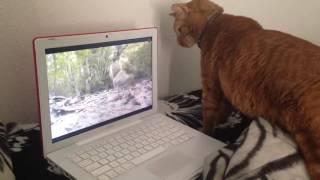 Кот и компьютер!