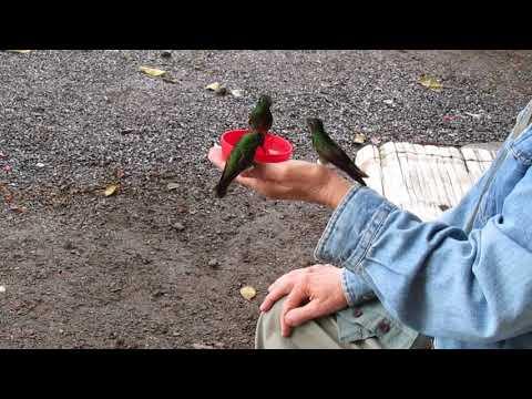 Bellavista visitor with hummingbirds