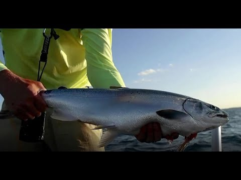 Full Moon King Salmon Fishing on Lake Michigan with Best Bite Guide Service