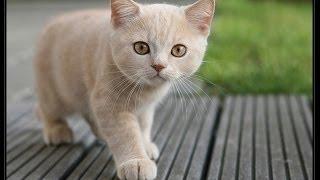 Кошки бросают все на пол (2015) | Cats drop things compilation
