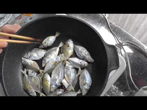 今釣れているヒイラギ美味しいですよ~  (釣人にエサトリ扱いされる魚も食べると美味) 和歌山 釣太郎