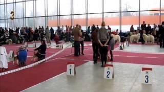 Монопородная выставка ИМПТ 01.02.15 г.Москва. Класс щенков.Суки