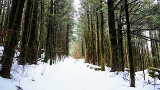 WINTER Backpacking in SNOW » Snake Den Ridge, Baxter Creek (Great Smoky Mountains)