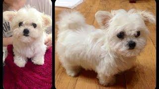 Покупка собаки в Корее, гарантийный срок и обслуживание