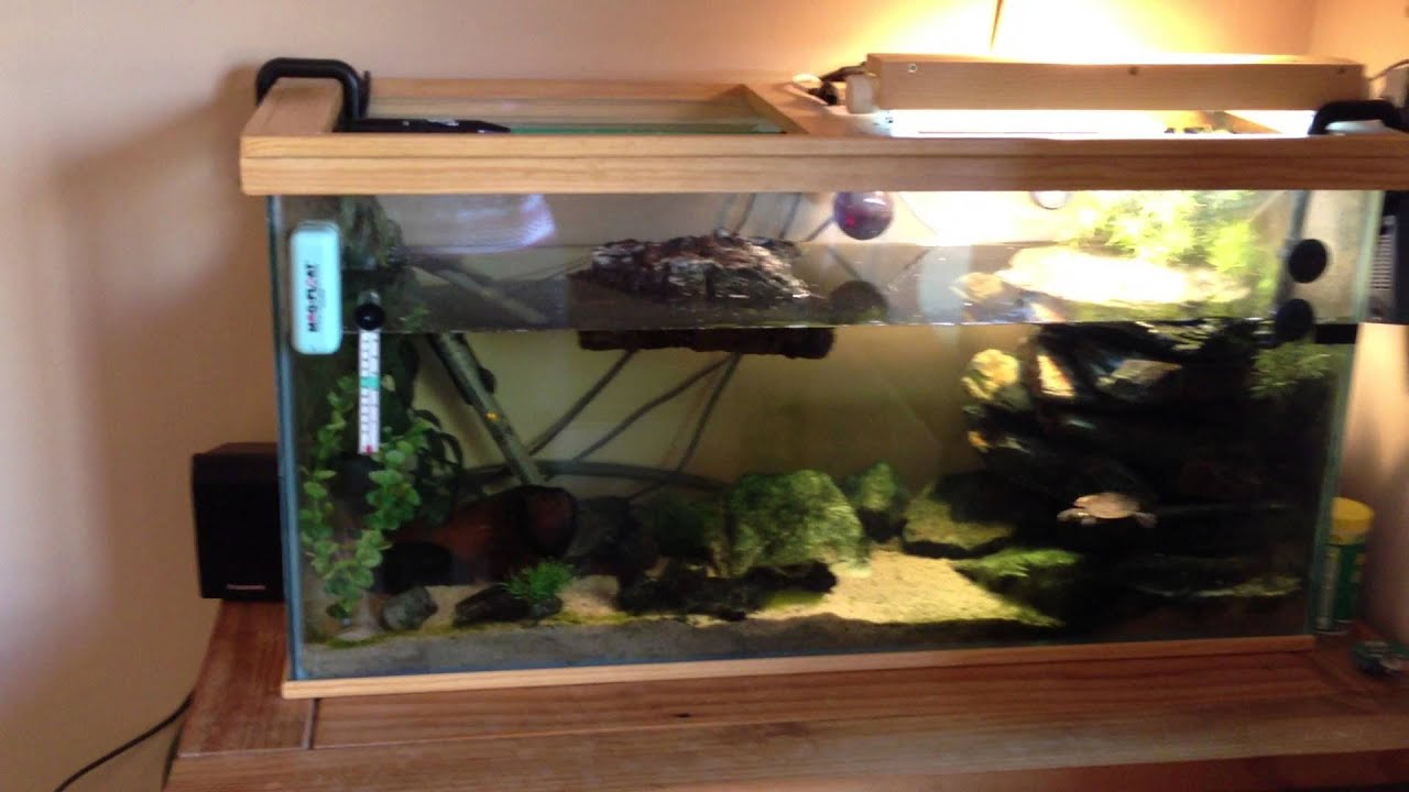 mississipi map turtle setup for sale   youtube