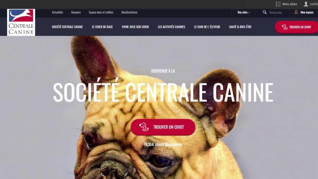 centrale canine manifestation