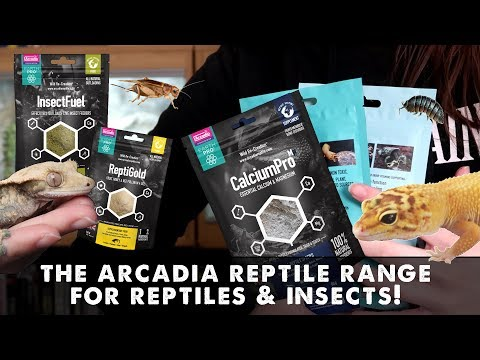 Reptile & Insect Products I Use & Where YOU Can Find Them!!