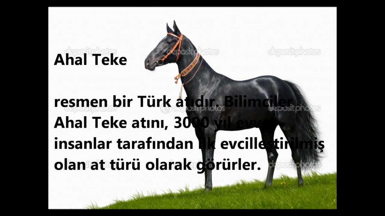 Türkmen Atı Ahal Teke Youtube