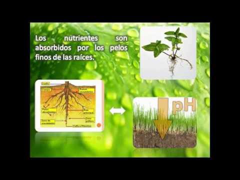Los Nutrientes en las Plantas - YouTube